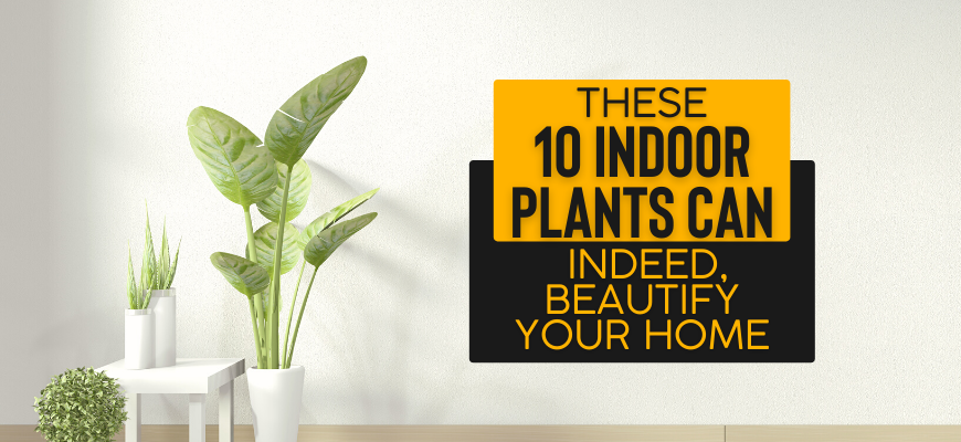 These 10 Indoor Plants Can, Indeed, Beautify Your Home